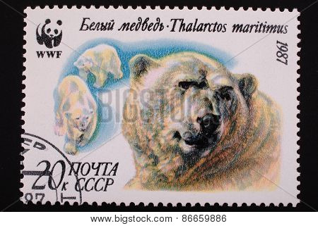 Moscow, Ussr- Circa1987: Postal Stamp Printed Mail Ussr Shows Image Of Polar Bears