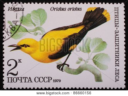Moscow, Ussr- Circa 1979: Postage Stamp Printed Mail Ussr Shows Image Of A Bird Oriole Protector Of