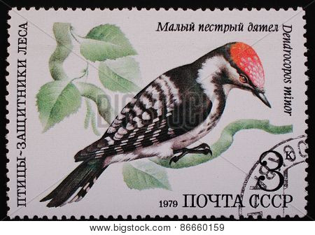 Moscow, Ussr- Circa 1979: Postage Stamp Printed Mail Ussr Shows Image Of A Bird Lesser Spotted Woodp