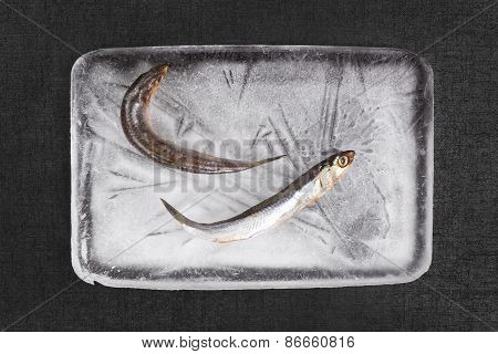Sardine Fish On Ice Block.
