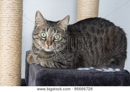 Portrait Of Green-eyed Cat Surprised Isolated On Grey Background