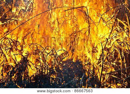 Fire On Field