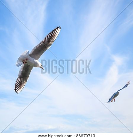 Two Seagulls Fly In Blue Cloudy Sky