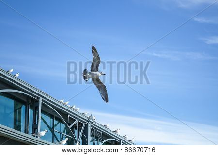 Seagull Flying On Sky Background Near The Pier