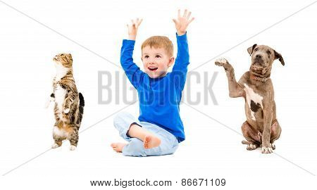 Cheerful boy, puppy and cat