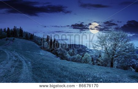 Path To Forest In Mountains At Night