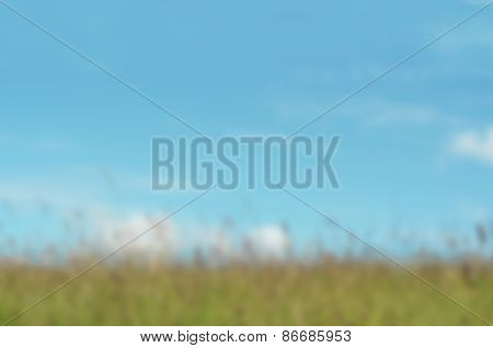 Long Grass Meadow Against Bright Blue Sky