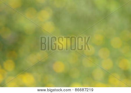 blurred sring flowers bokeh background; defocused