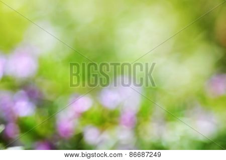blurred spring flowers background; defocused