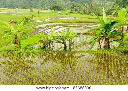 Indonesia Countryside
