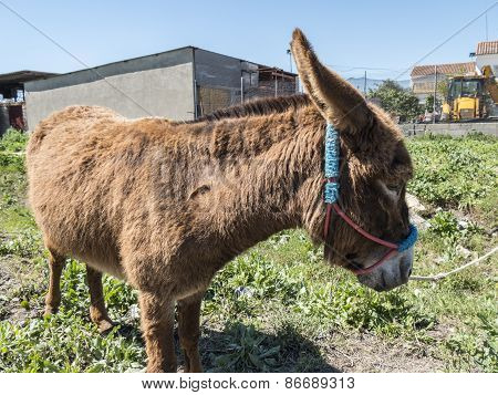 Donkey In The Field