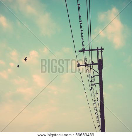 Birds On Power Line Cable Against Blue Sky With Clouds Background Vintage Retro