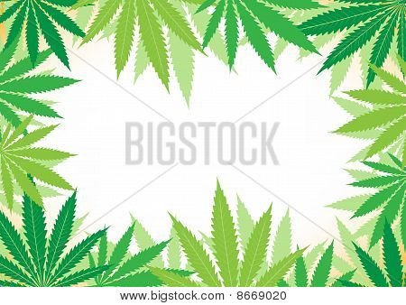Hemp White Background