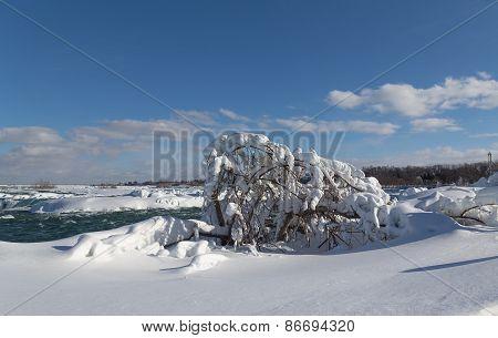 Frozen Tree In The Winter