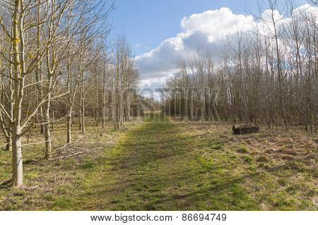 Rural Path With Trees Either Side