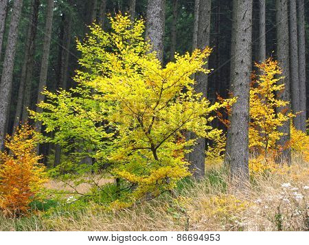 small colorful trees
