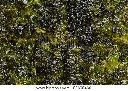 Dried seaweed Laminaria or seaweed background close-up