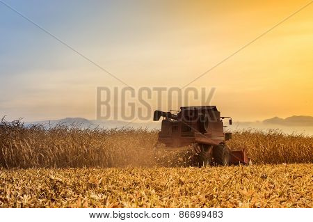 Red Harvester Working On Corn Field