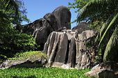 pic of enormous  - Beautiful enormous black granite rocks in the thickets of tropical vegetation - JPG