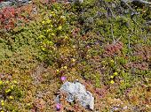 foto of chase  - Succulent plants on the rocks of Flinders Chase on Kangaroo island in Australia - JPG