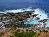 foto of chase  - Succulent plants on the rocks of Flinders Chase on Kangaroo island in Australia