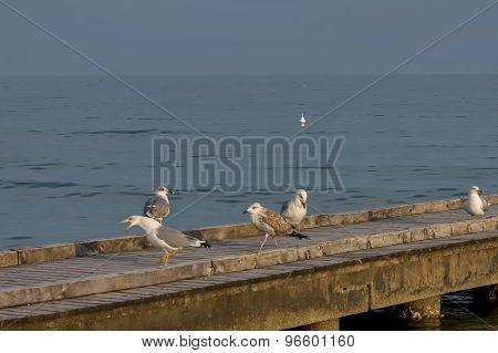 Seagulls at wood path in beach