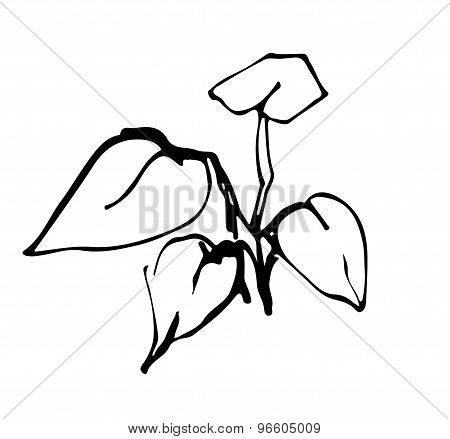 Vector Illustration Sprout Plant Ink Graphics