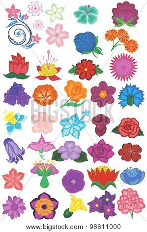 Flowers Collection. Flowers isolated on white background.