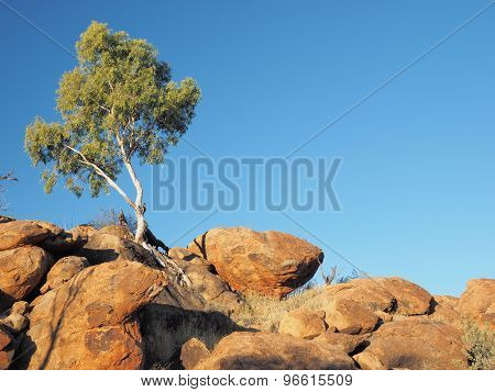 Gum Tree and outback rock formation near the old Telegraph Station