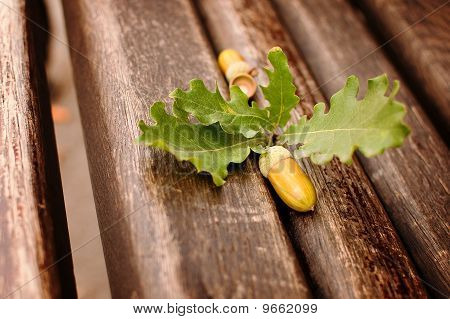 Oak Acorn And Leaves