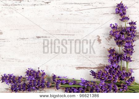 Lavender Background.