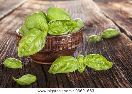 Basil Herbs.