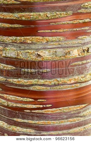 Ornamental Cherry Bark