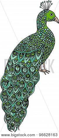 Hand drawn doodle peacock illustration decorated with ornaments and swirls