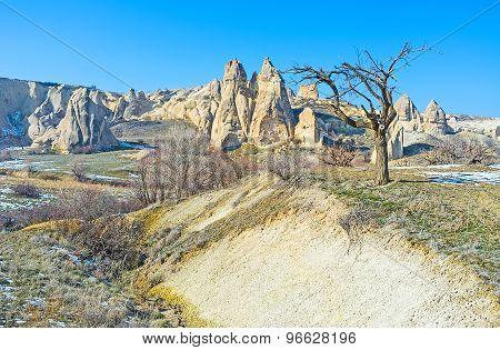 The Yellow Rocks