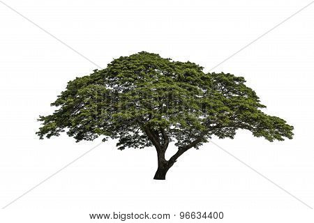 Isolated Tree On A White Background.