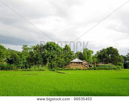 Rural Rice Fields