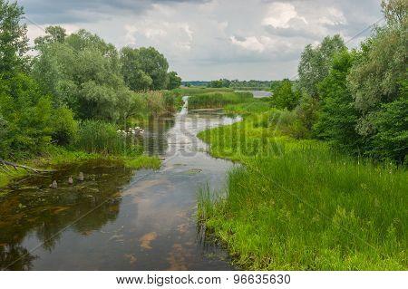 Summer landscape with small river Kolomak