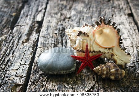 A Large Sea Shell, Smooth Stone On A Wooden Background