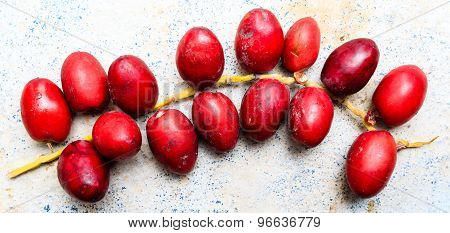 Closeup of freshly plucked red coloured date palm fruits kept on a plain background