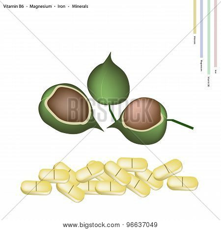 Macadamia Pods with Vitamin B6, Magnesium and Iron
