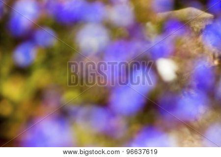 Purple, Yellow Defocused Bokeh Abstract Background