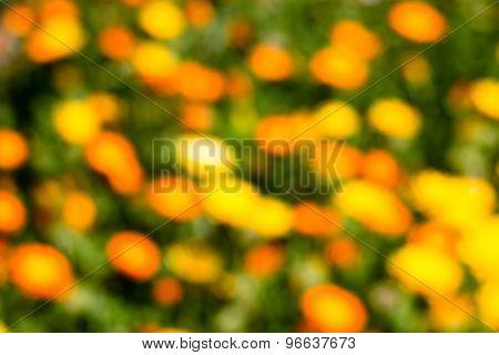 Orange, Yellow Flowers On Green Defocused Bokeh Abstract Background