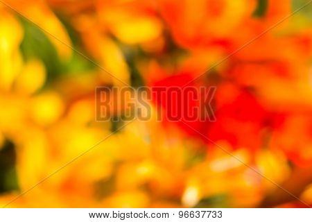Red, Yellow, Orange, Green Defocused Bokeh Flowers In Abstract Background