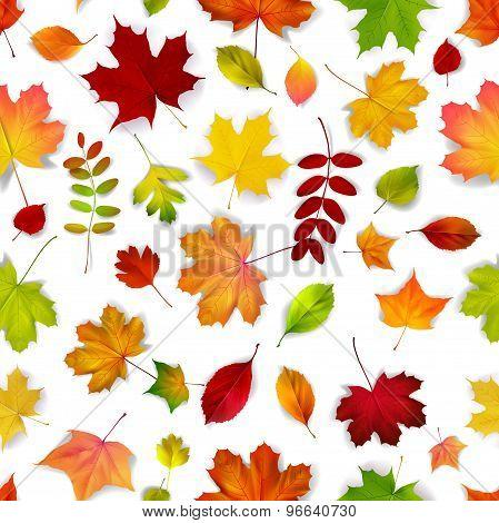 Vector Autumn Leaves Seamless Pattern