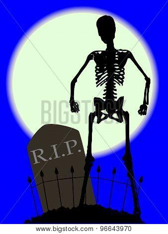 Cemetery Bones