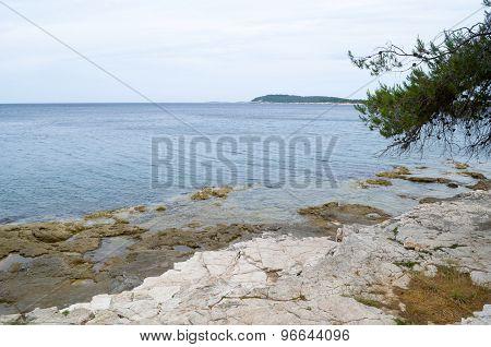 Rocky Coast With Pine
