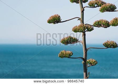 Portuguese tree