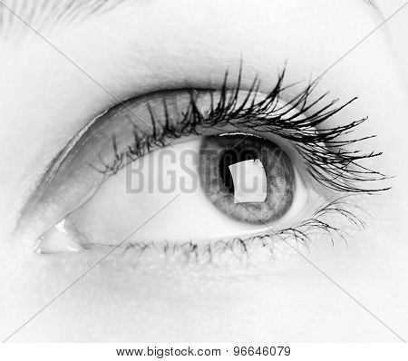 Close-up Of Woman Eye