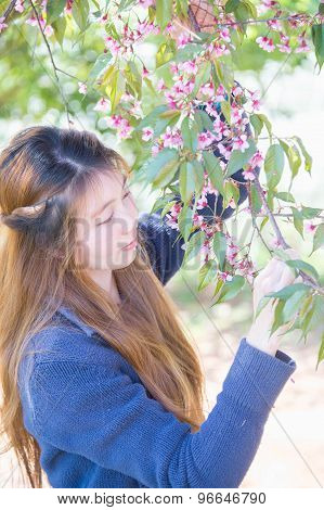 Asian Woman With Himalayan Cherry Or Cherry Blossom